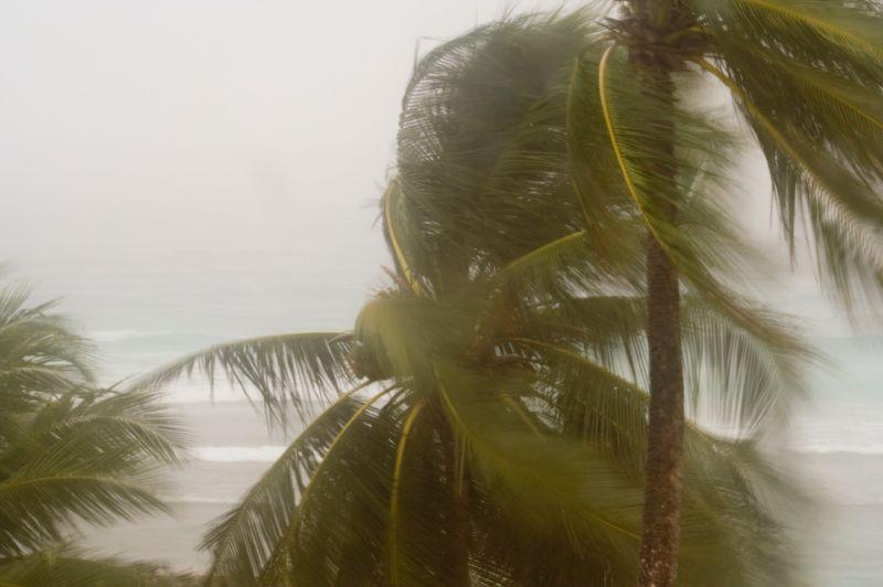 Tropical storm 2